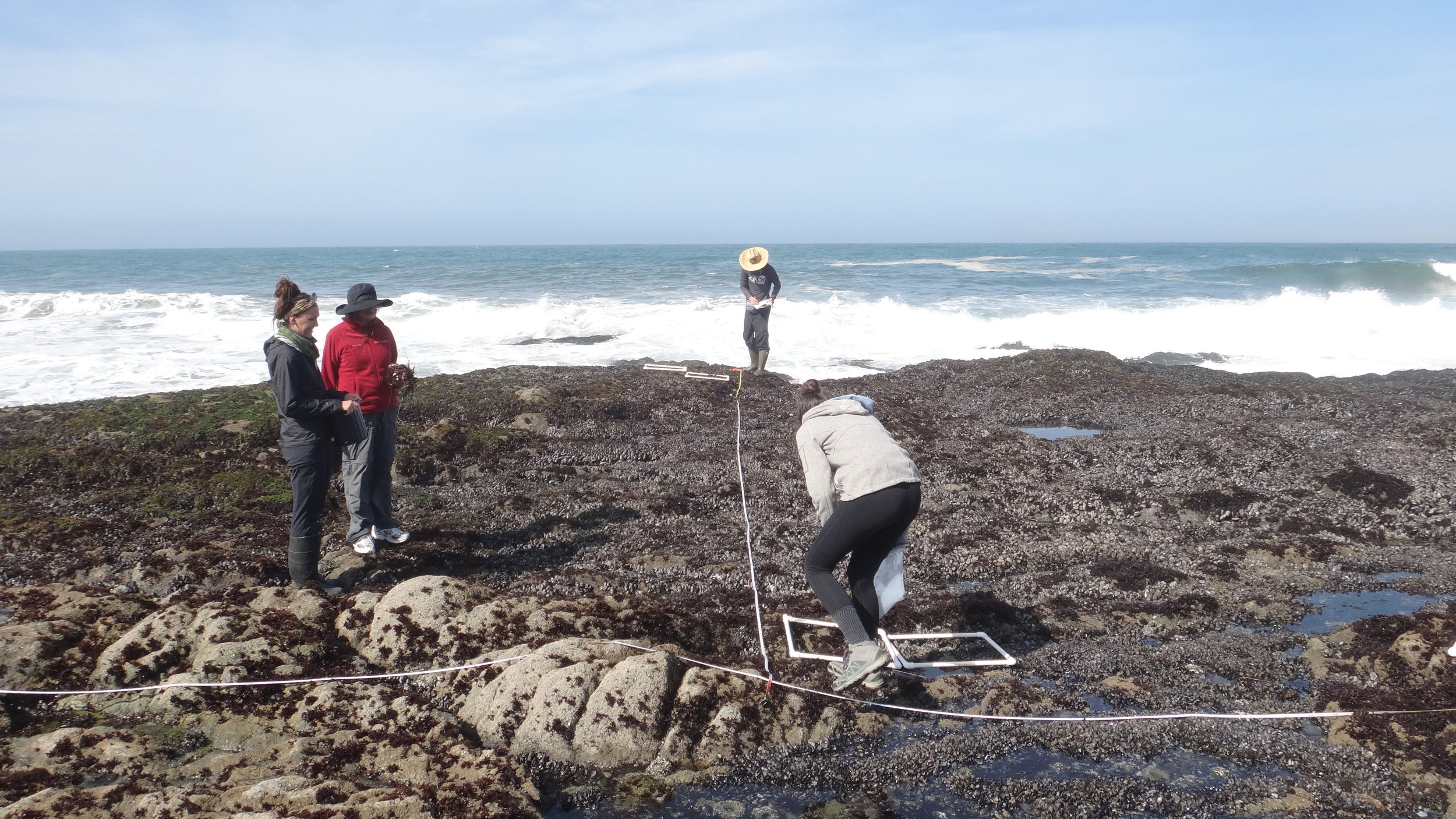 Dr. Susan Williams (in red), helping us to collect samples on the intertidal zone to look for microplastics. Photo credit: Alexander Carsh