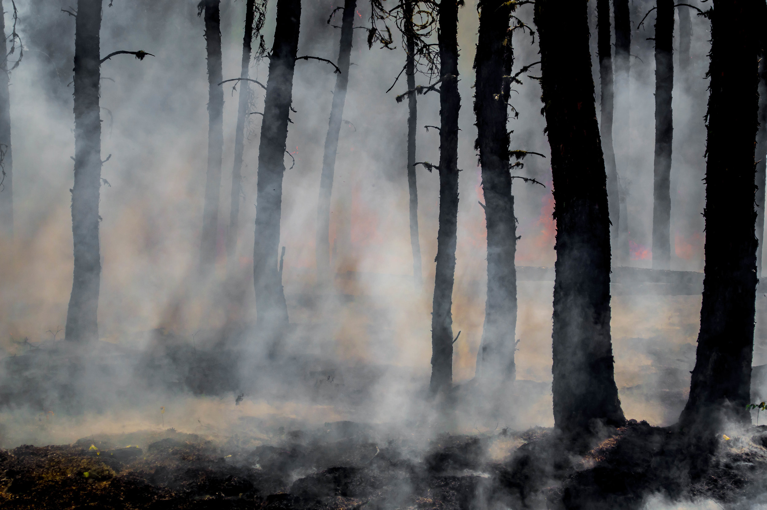 Prescribed burns of forests have been used for centuries to manage and restore environments.
