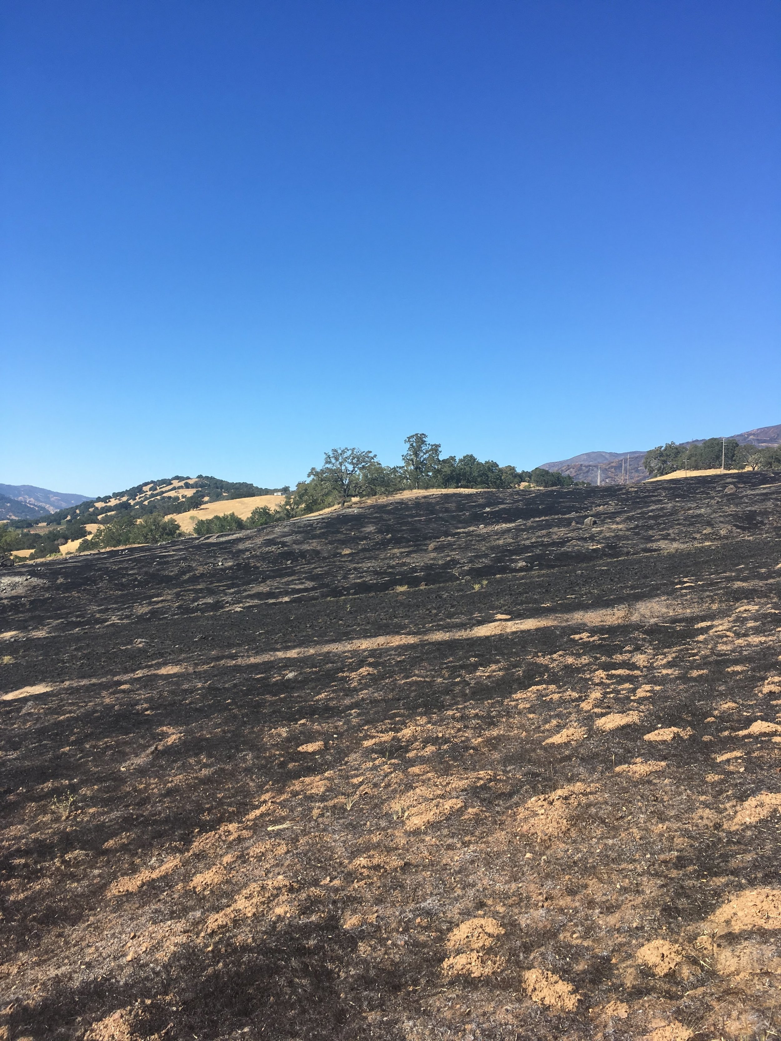 September 2018, Fire scars in a northern California grassland after the Mendocino Complex Fire. Restoration ecologists are studying how more frequent and more high severity fire impact the recovery of ecosystems.