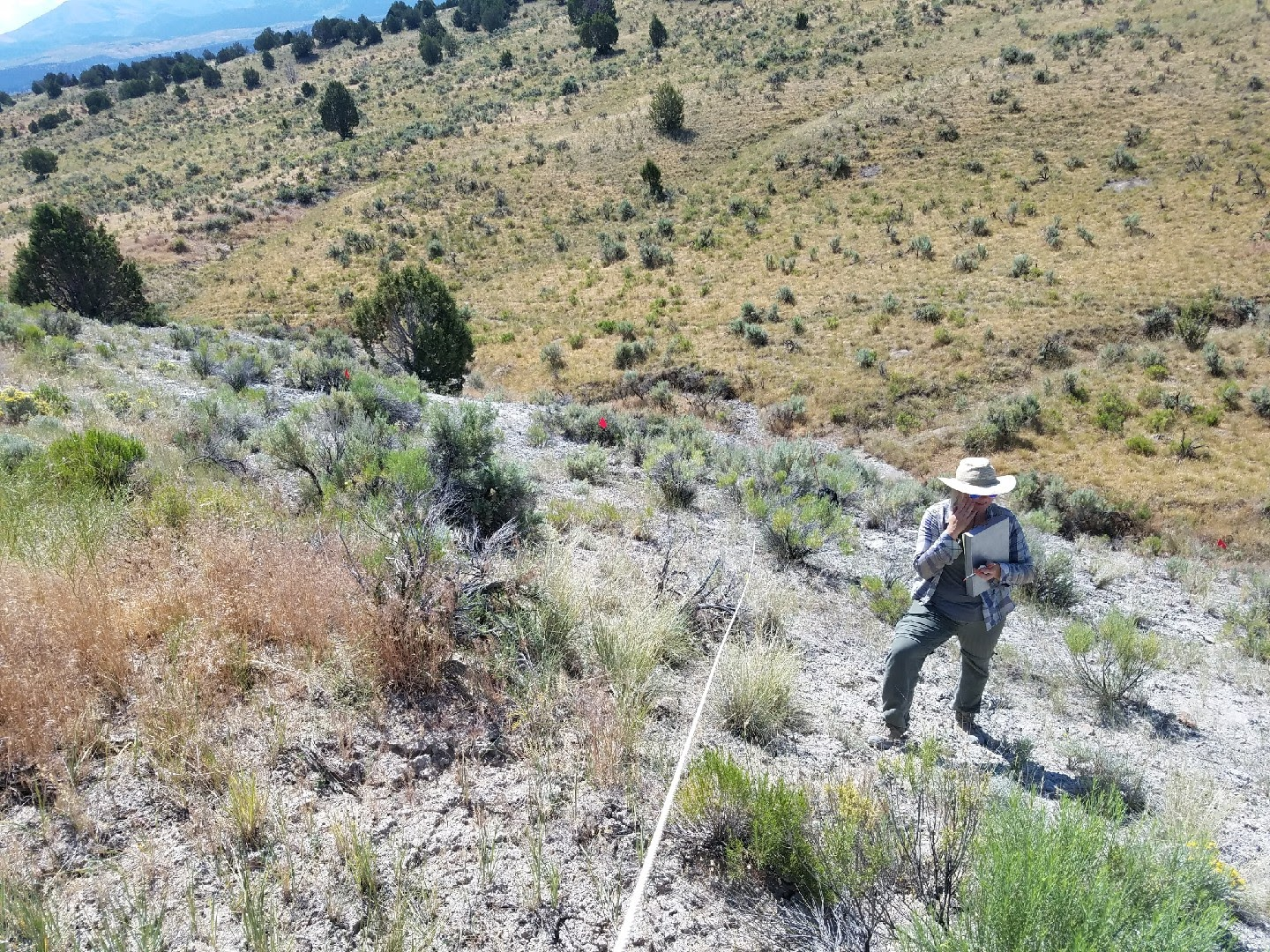 The author running transects to monitor a rare plant species, Goose Creek milkvetch, to understand how their population may be affected by restoration efforts in the area.