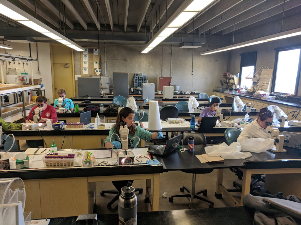 Shortly after Susan had passed, the graduate students went back to her lab in Bodega Bay and to look for microplastics in samples they took from seawater, sand, seaweed and snails.  Photo credit: Alisha Saley.