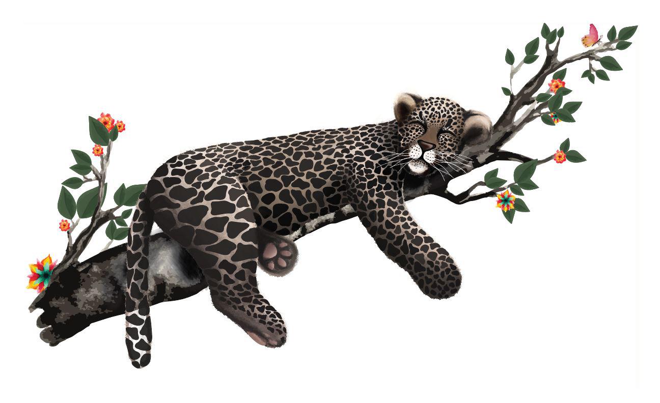 Leopard_lowres.jpg