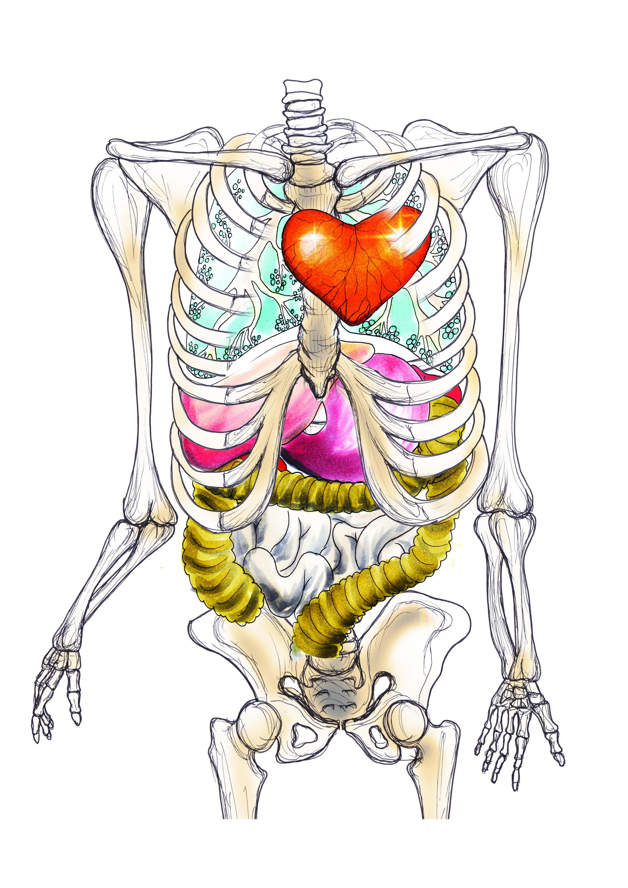 organer og hjerte av gull.jpg