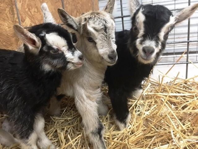 Helens triplets.JPG