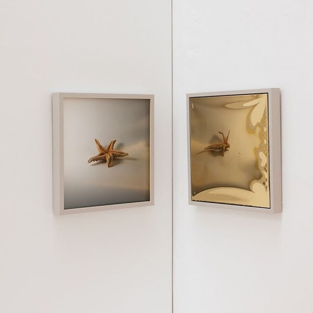 Stella Baraklianou shown at @grosvenor.gallery for The Place. • • •  #photography  #exhibition #reflection #thismustbe #starfish #materiality #art