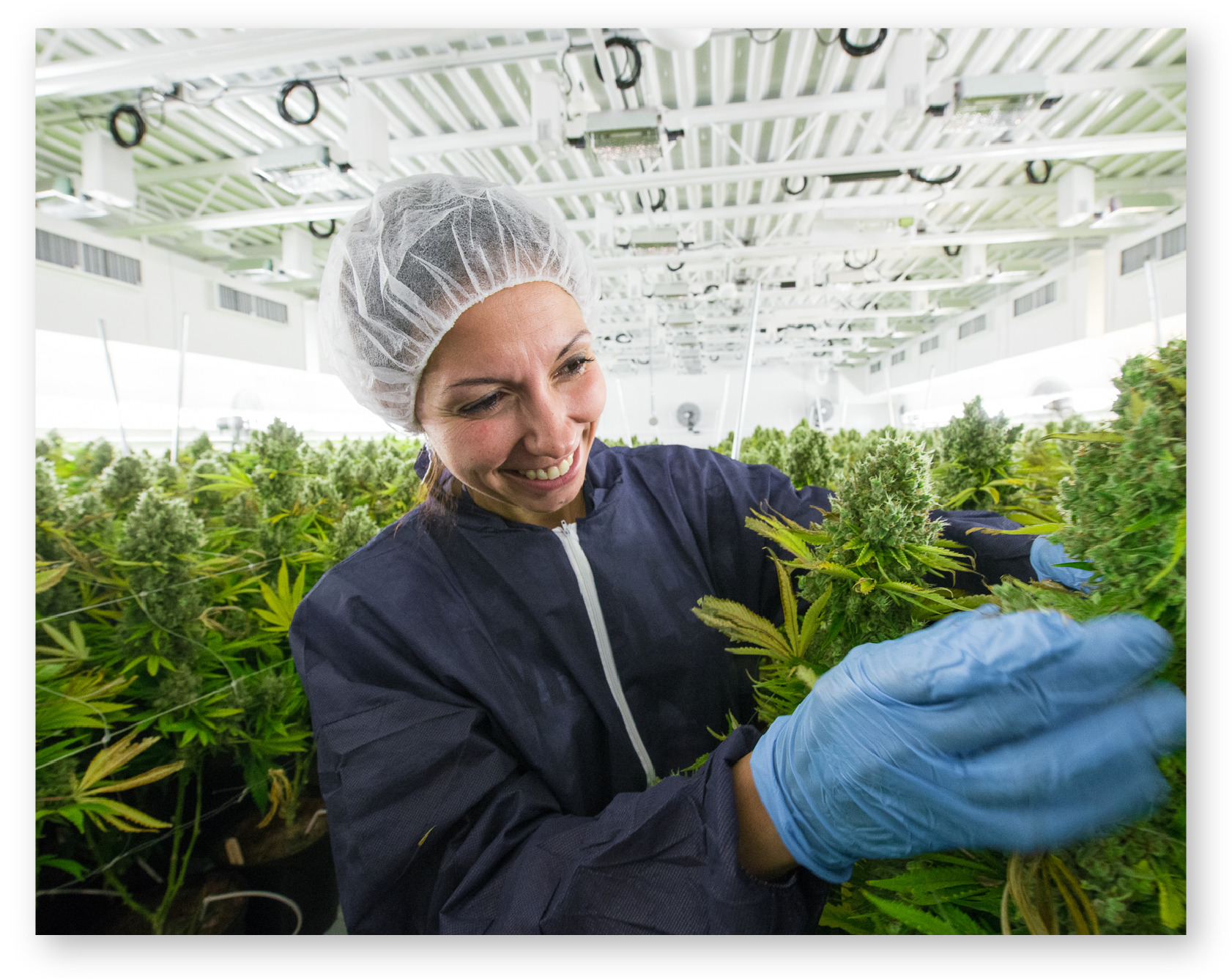 Our home - Our beautiful green homes are located in British Columbia and Ontario, where we grow our Irisa products with love, care, and cutting-edge technology. From cultivation to shipping, our team brings precision, professionalism and care to each stage of the process.
