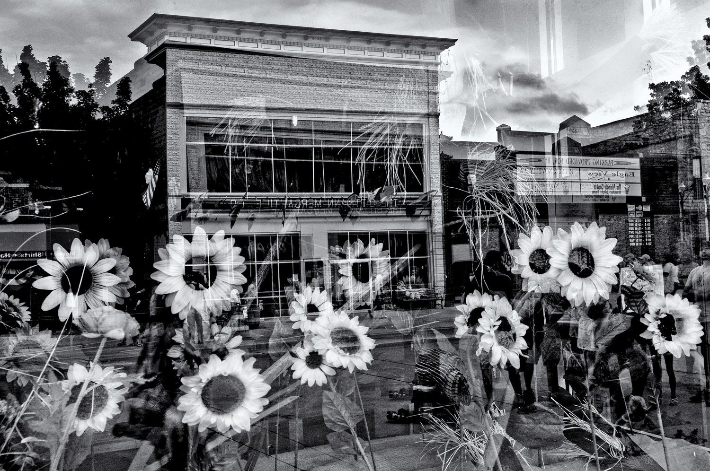 _TCC4251 16.2 for wamgo adobe whiter sunflowers.jpg