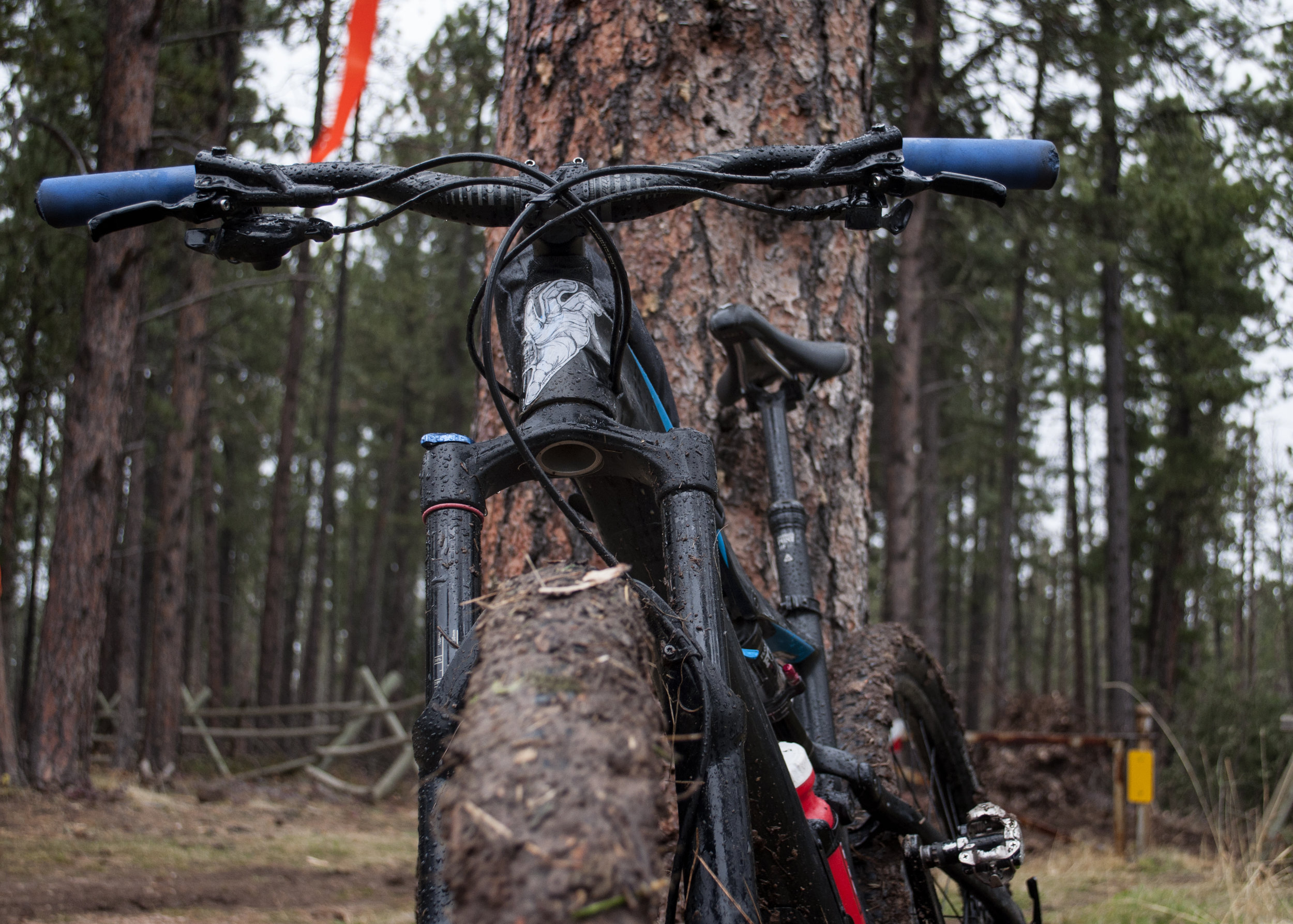 2017 Specialized Camber - I call her Muffy. The Camber, now discontinued, was designed to be the XC sister to the StumpJumper. With a less aggressive head angle and slack, she's a real climber. She's poppy, too, and agile. While she can get beat down on gnarly terrain, she shines on her rolly, flowy home turf.