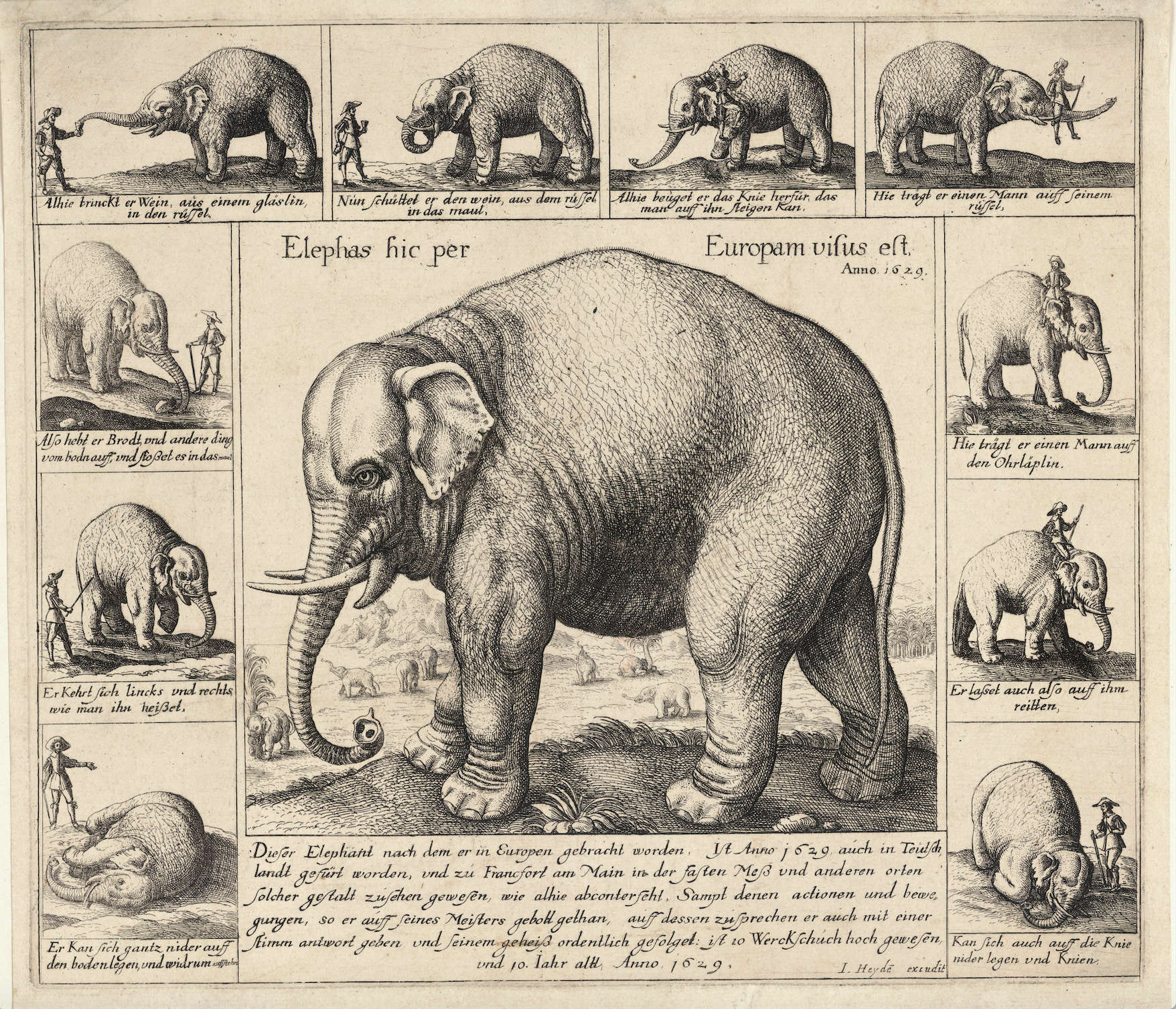 Don Diego performing tricks in Germany in 1629:   Wenceslas Hollar   The Tame Elephant WikiCommons — https://commons.wikimedia.org/wiki/File:Wenceslas_Hollar_-_The_tame_elephant.jpg