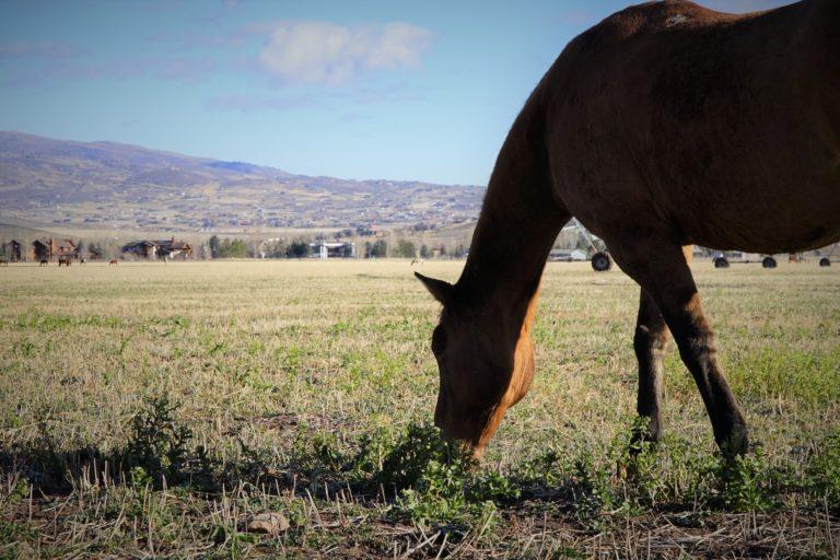 Horse-768x512.jpg