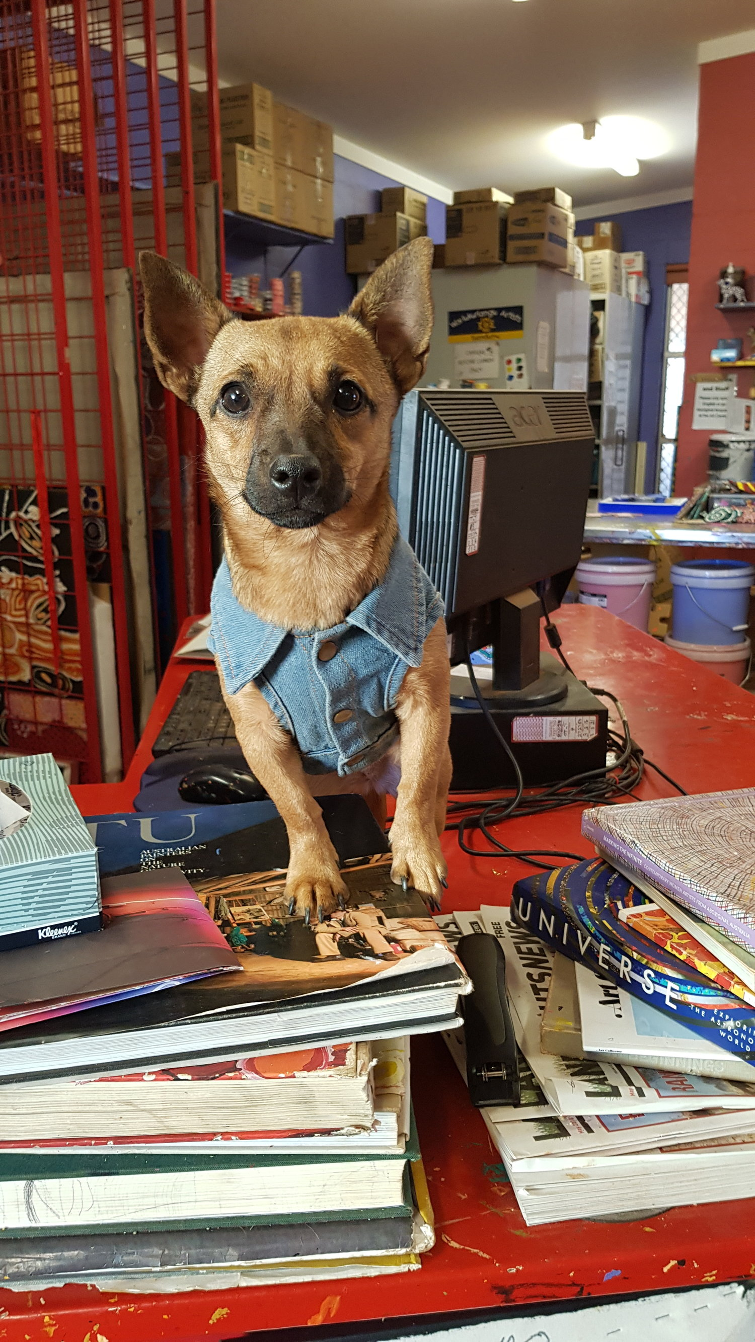 Rescue dog, Olive helping at the front desk.