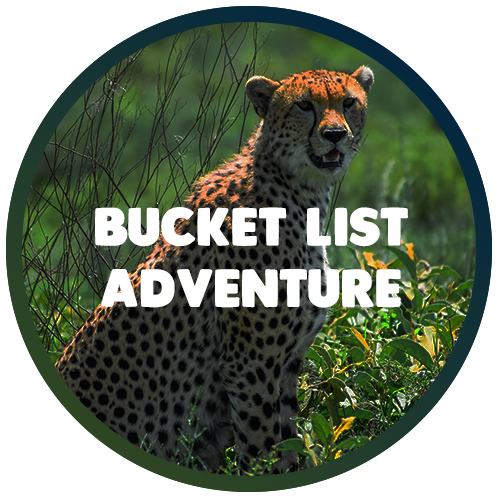 bucket-list-adventure.png