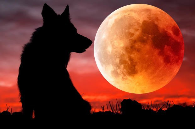 wolf and moon.jpg