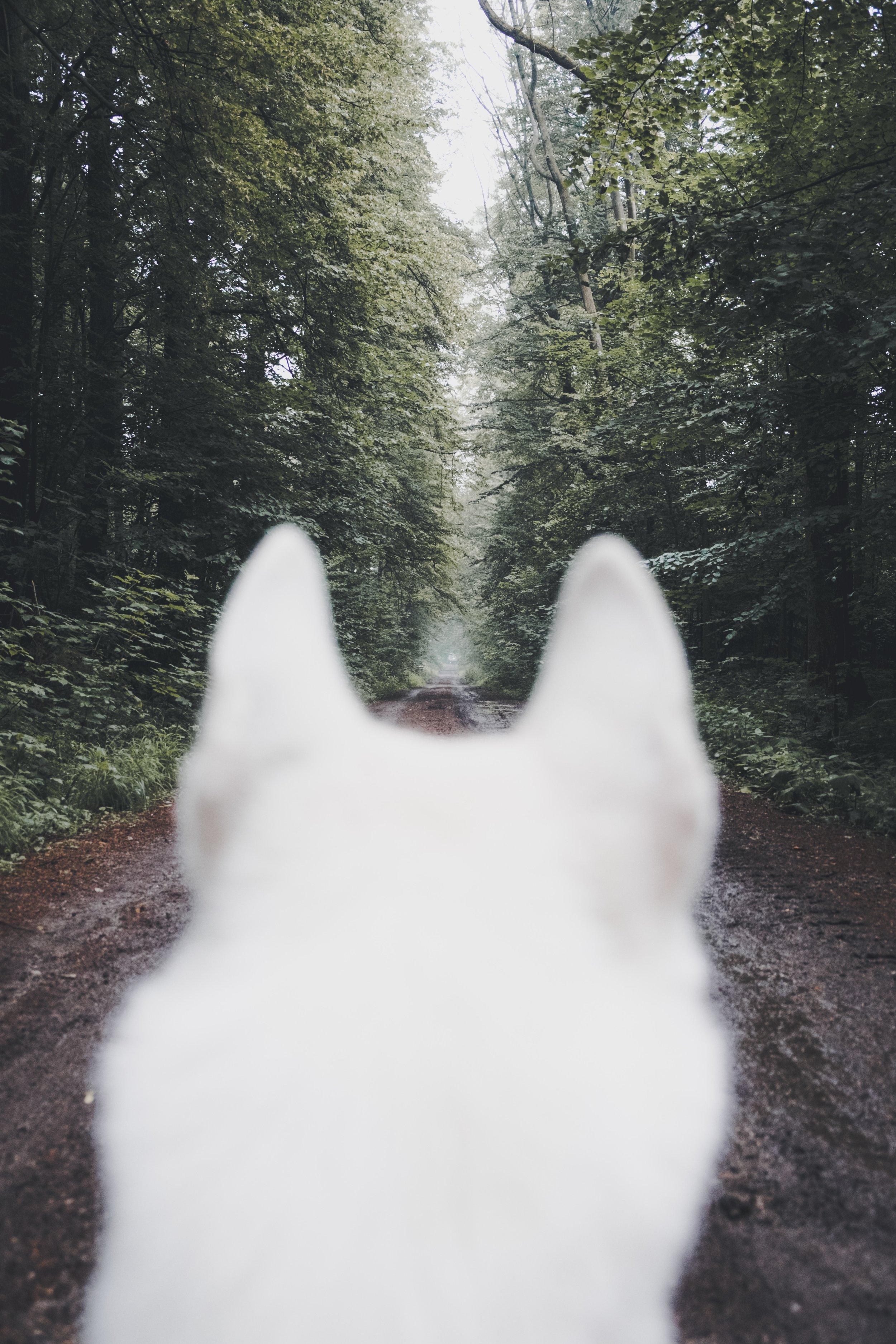 dog ears.jpg