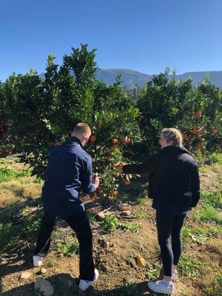 Thornlands Picking Oranges.JPG