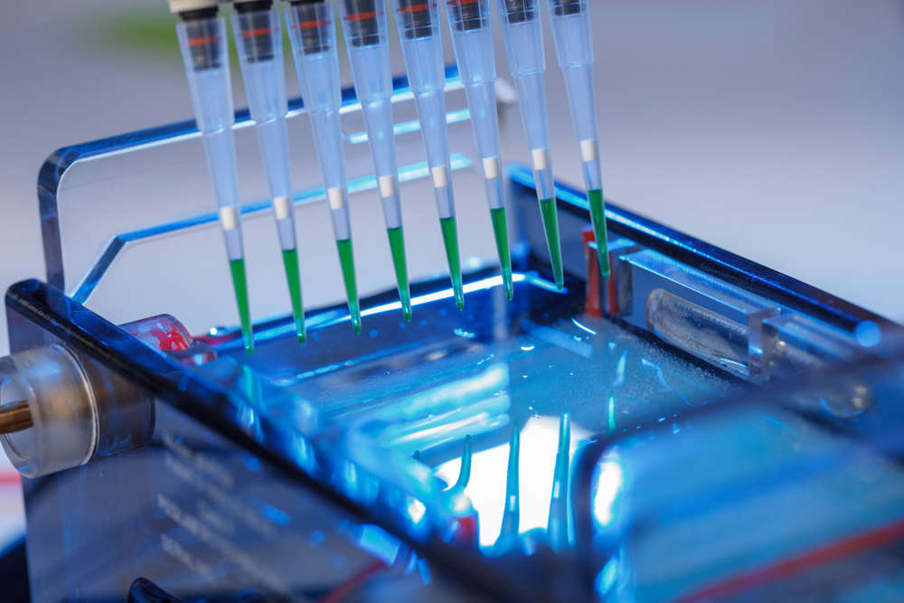 Identification of PCR products
