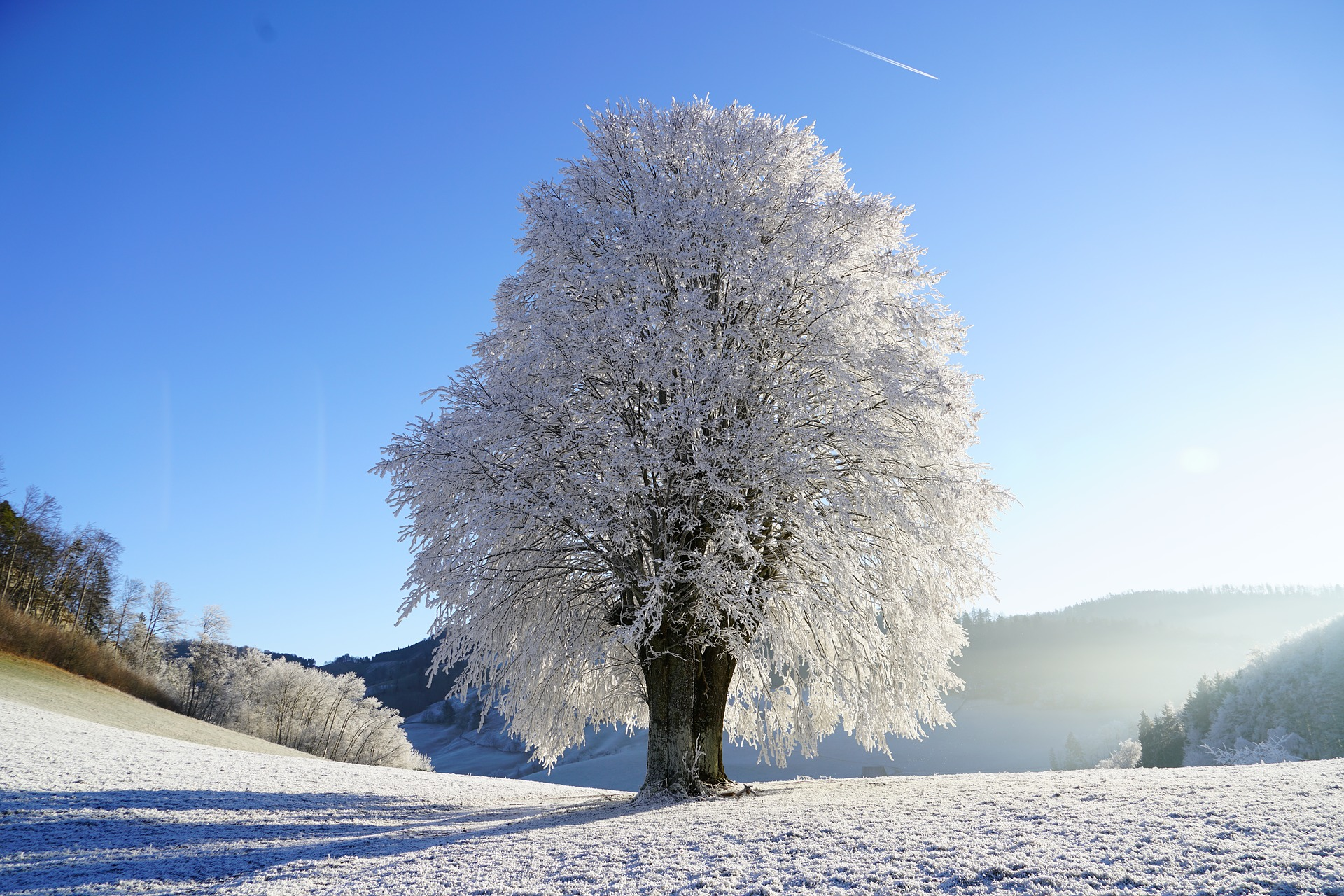 tree-1959267_1920.jpg