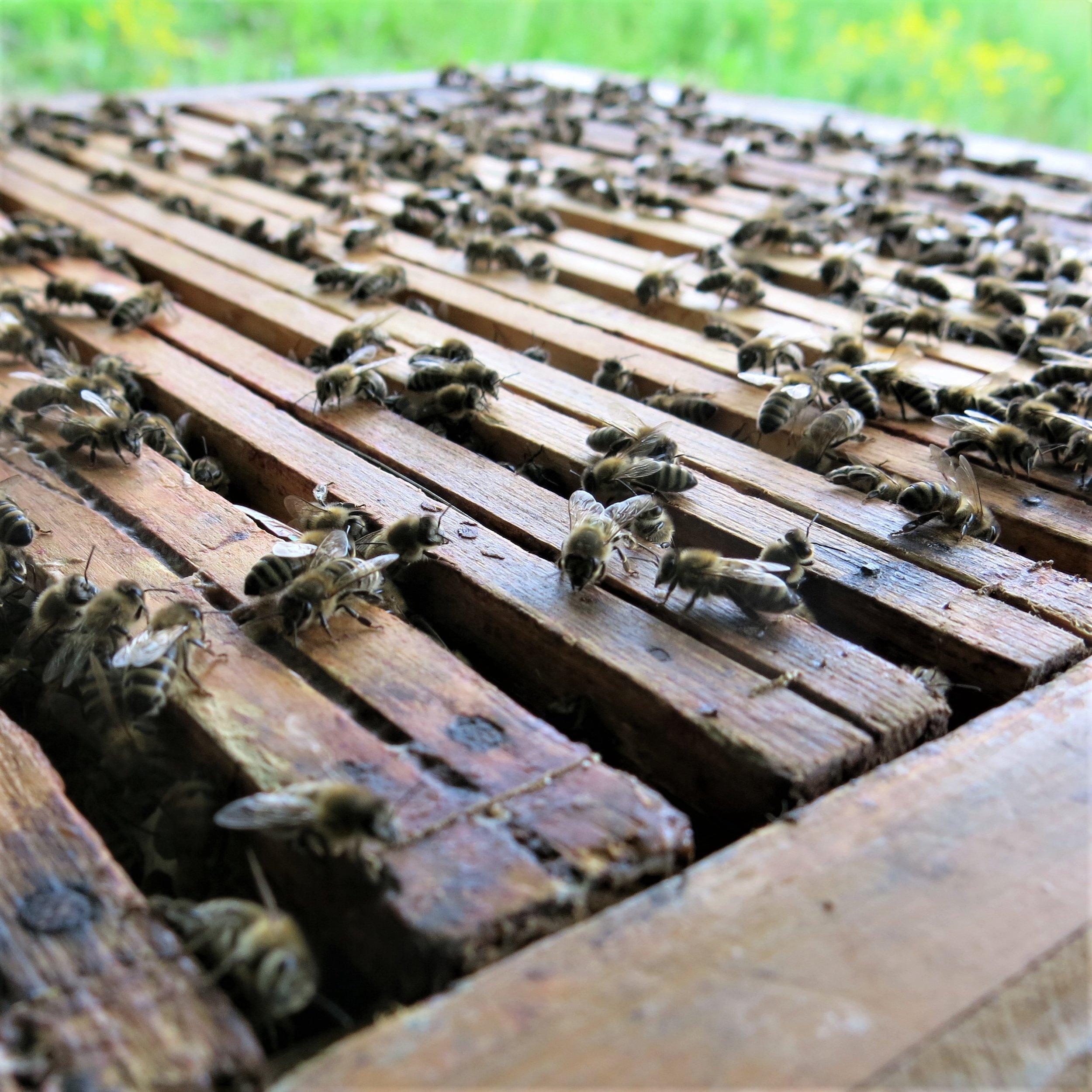 bier oppå kube kvadat.jpg