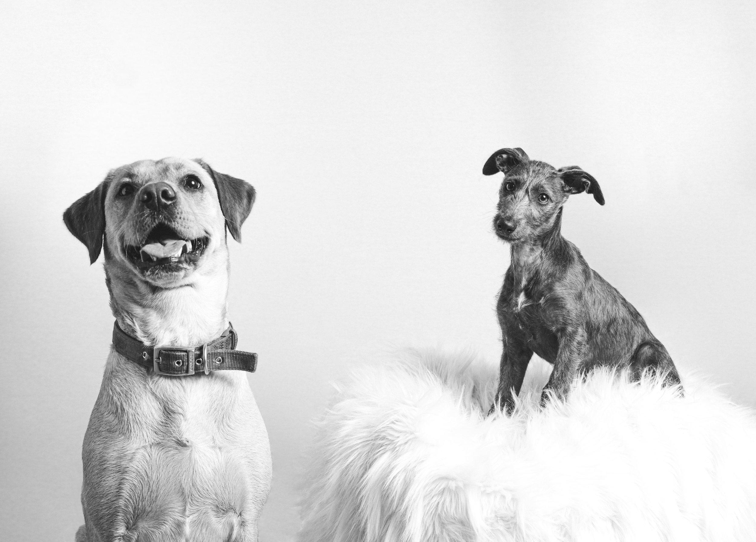 dog portrait 10.jpg