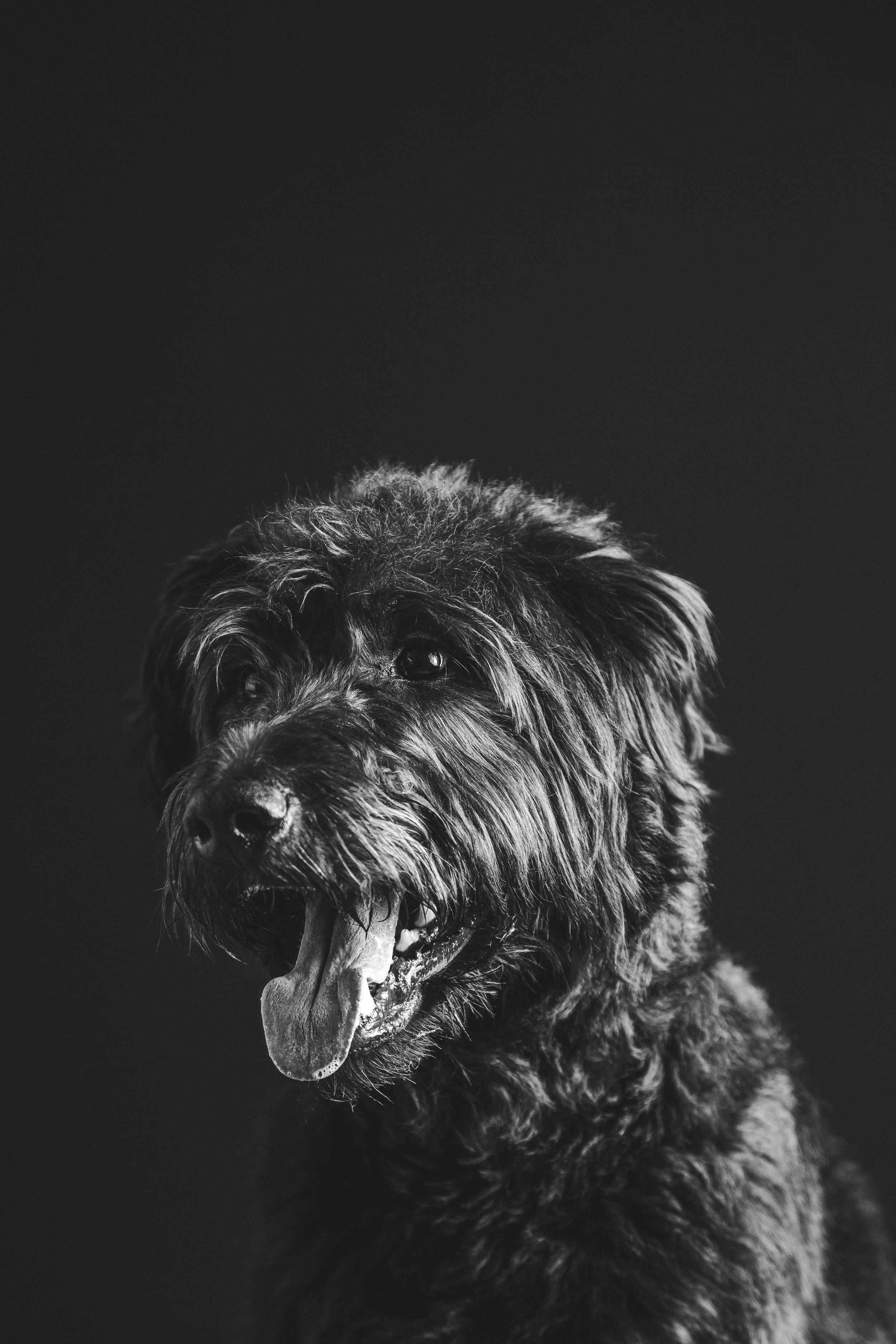 dog portrait 22.jpg
