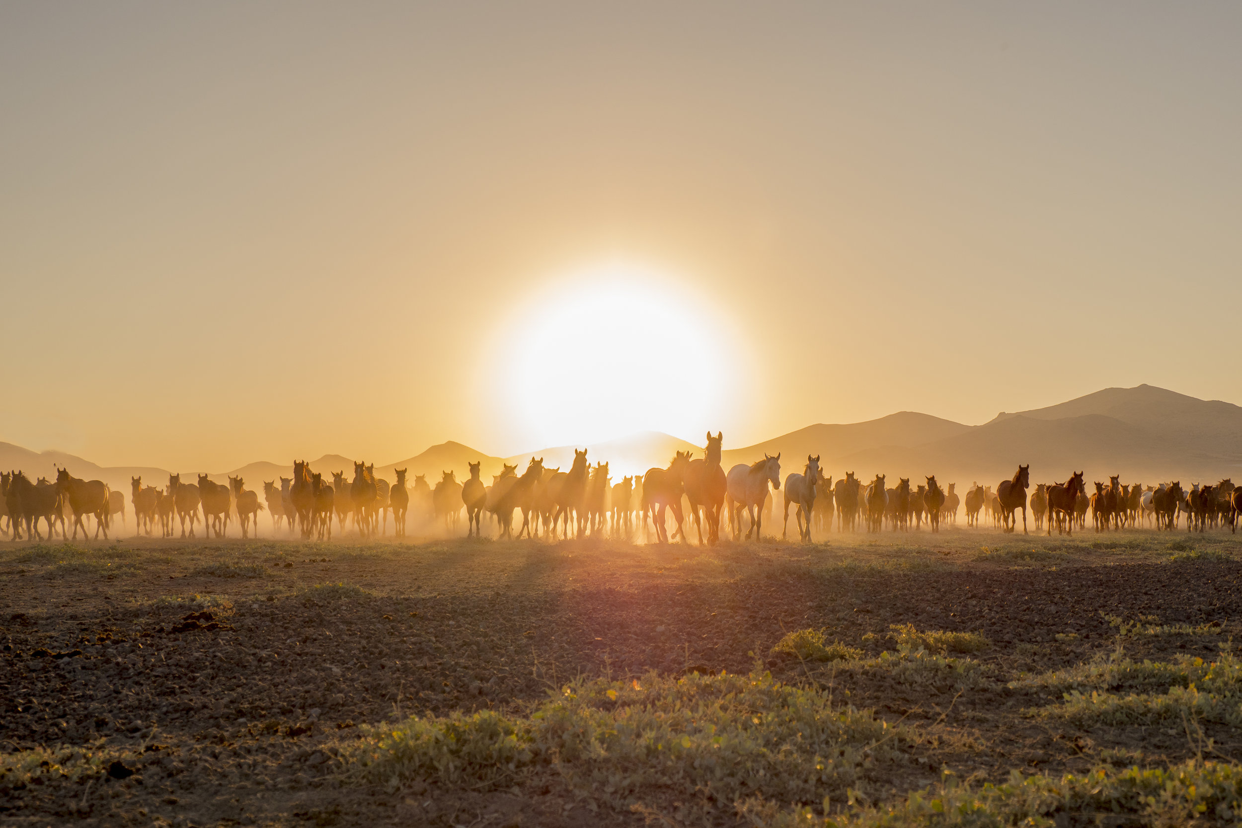 horses104.jpg