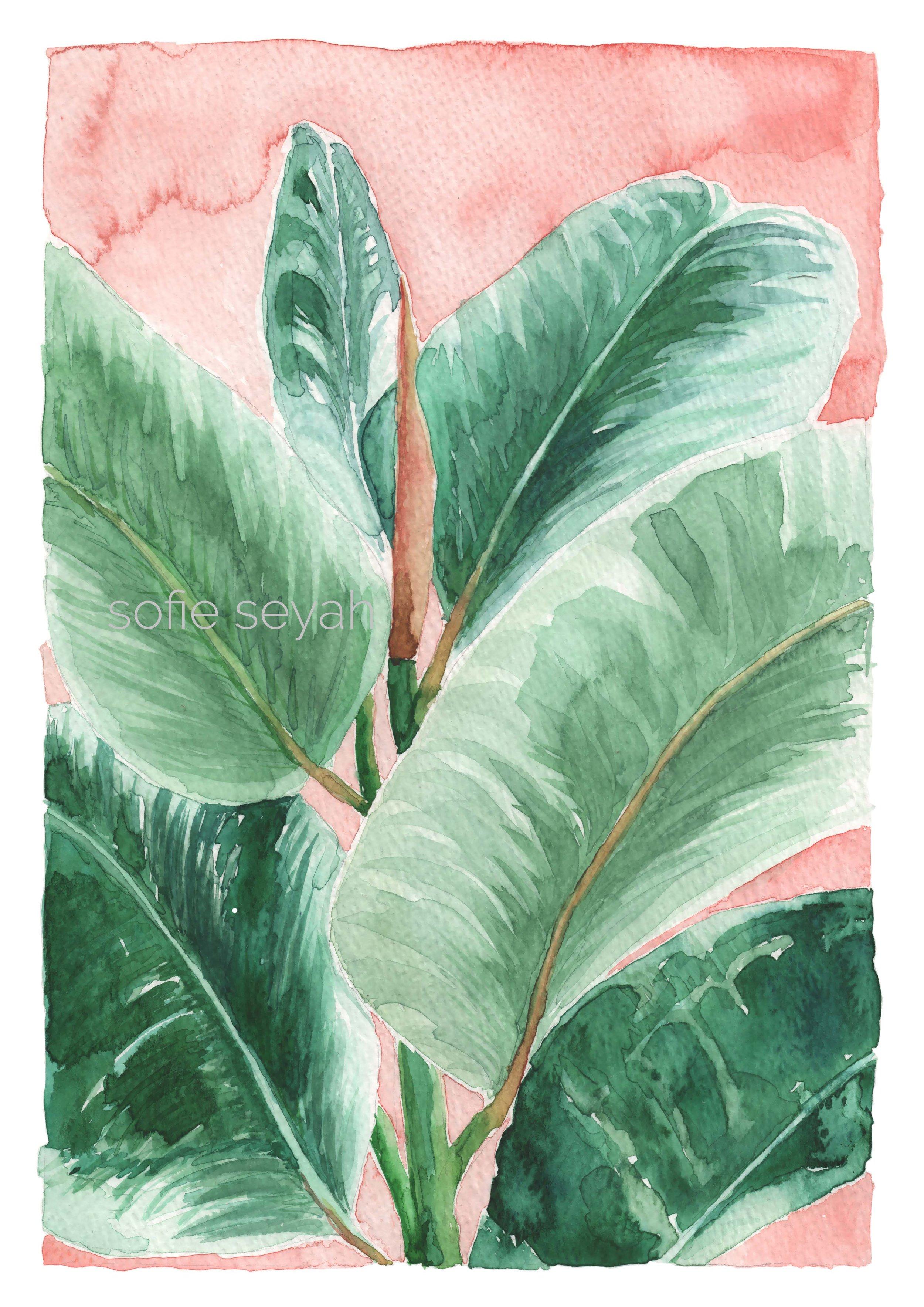 Watercolour Rubber Plant Art Print Sofie Seyah Illustration
