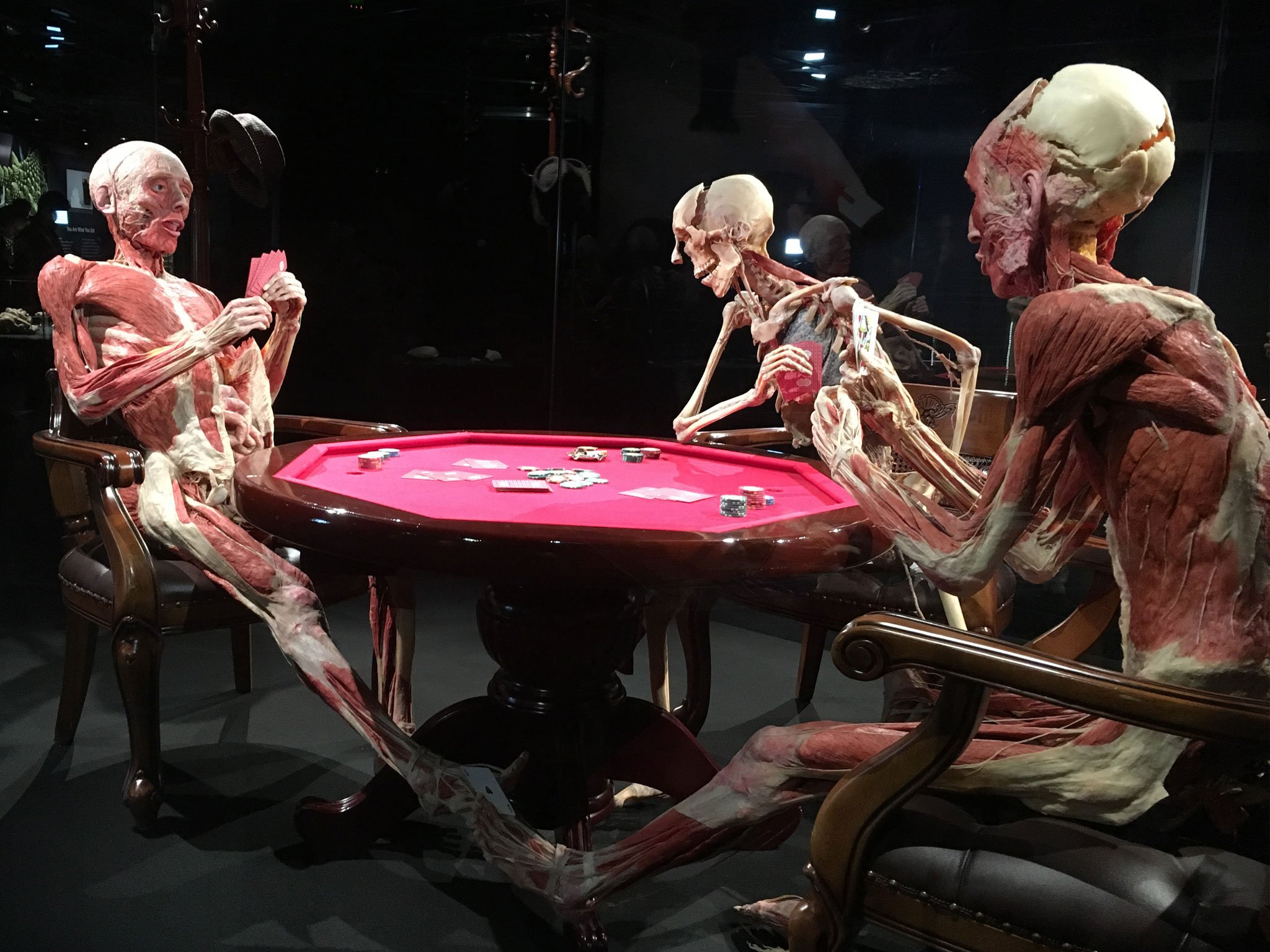 A behind the scenes look at the fascinating Body Worlds exhibition in London