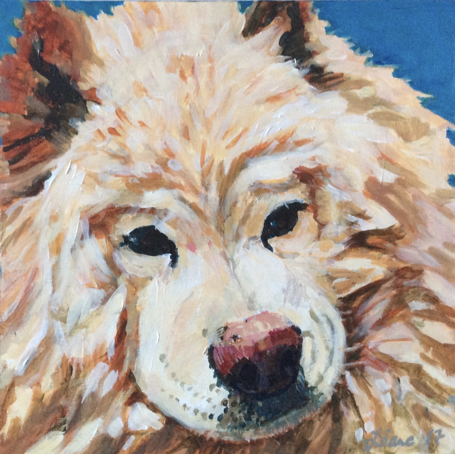 Bailey (sold)