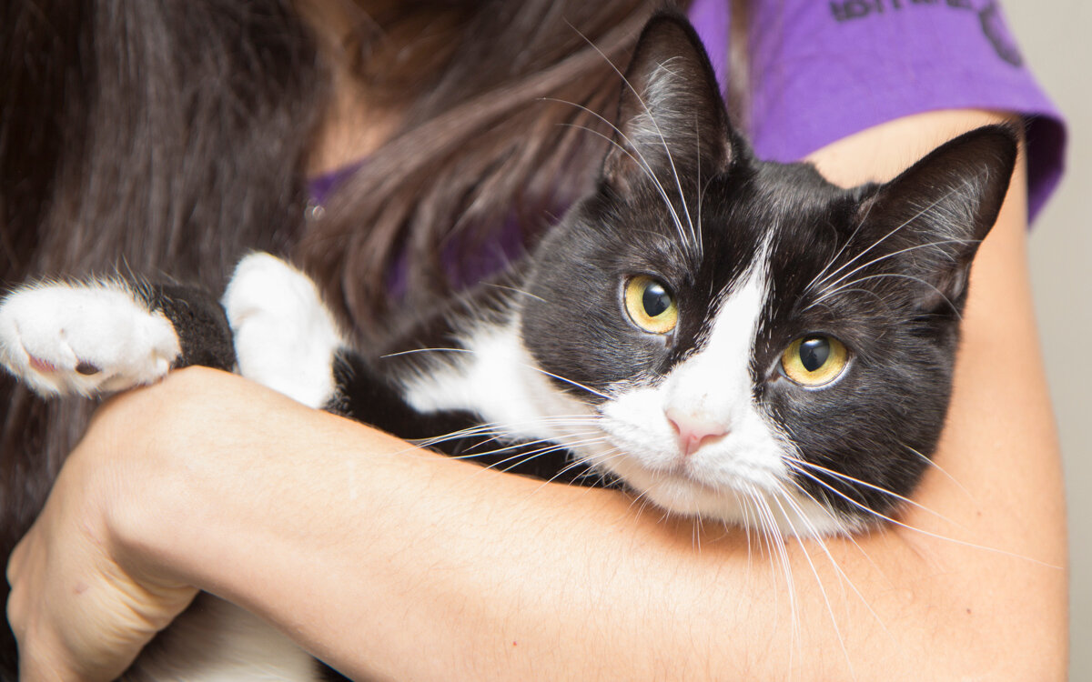 Ready To Adopt A Cat ? Where To Go To Find One