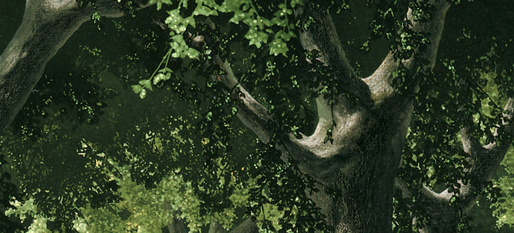 COUNTERPOINT TREES - Flip.jpg