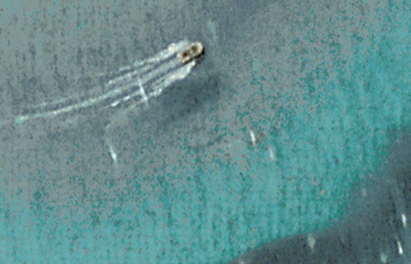 BLUE ANGELS - Detail 4.jpg