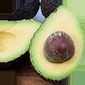 adria - avocado-1.png