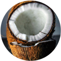 adria - coconut-2.png