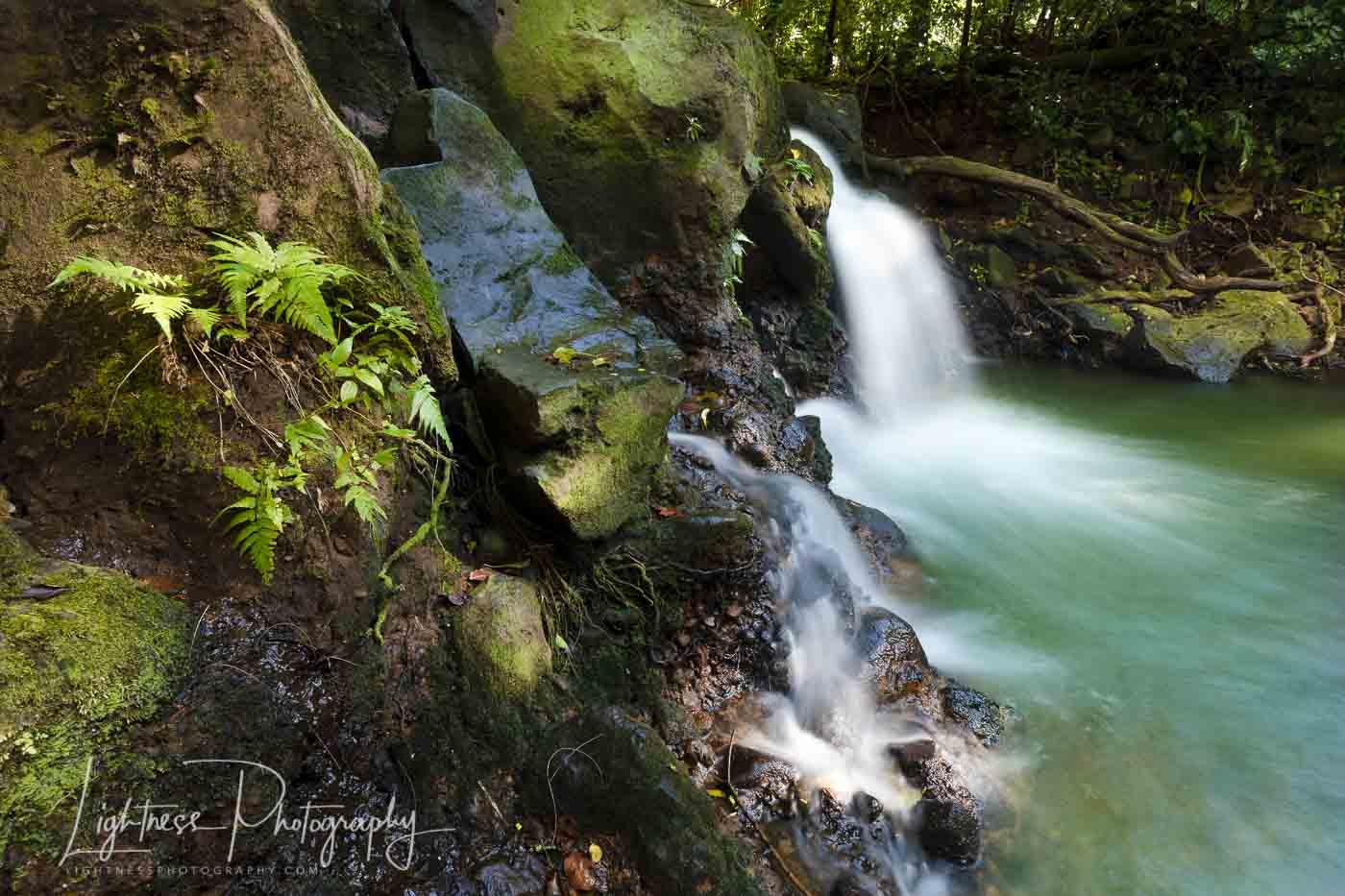 forest-stream-web-0259.jpg