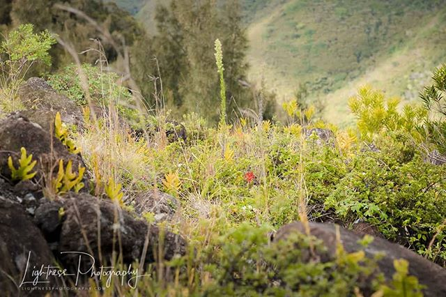 """Mountain Flower"" A lone red flower peeks above the surrounding grasses and other delicate flowers on a lush mountainside. #redflower #wildflowers"