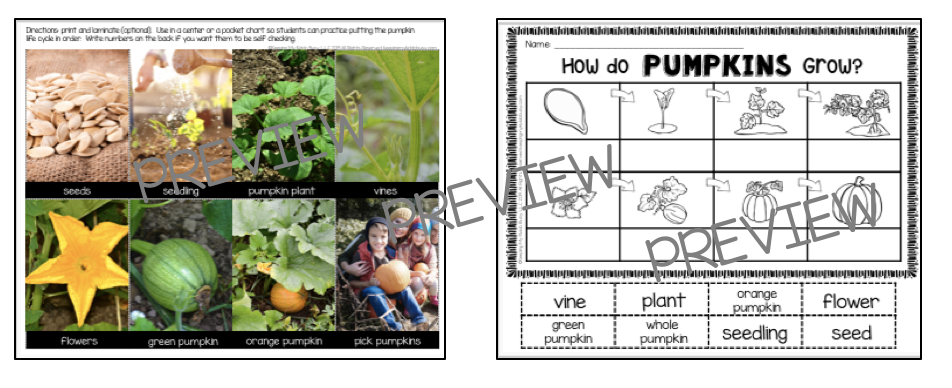 pumpkin lifecycle picture cards printable