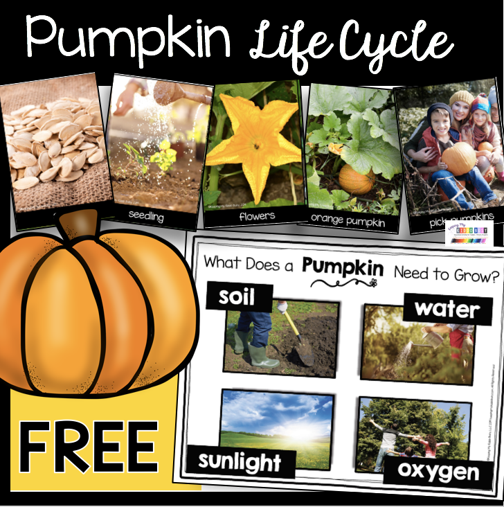 free pumpkin life cycle picture cards kindergarten