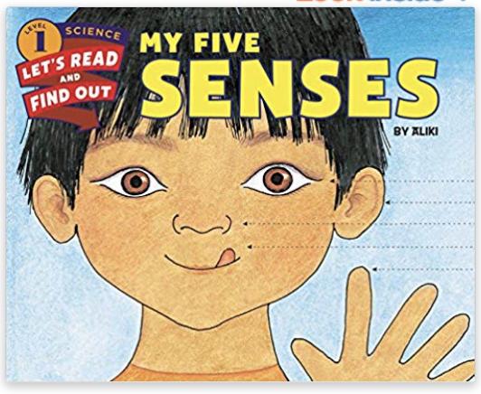 my five senses kindergarten pre-k first grade