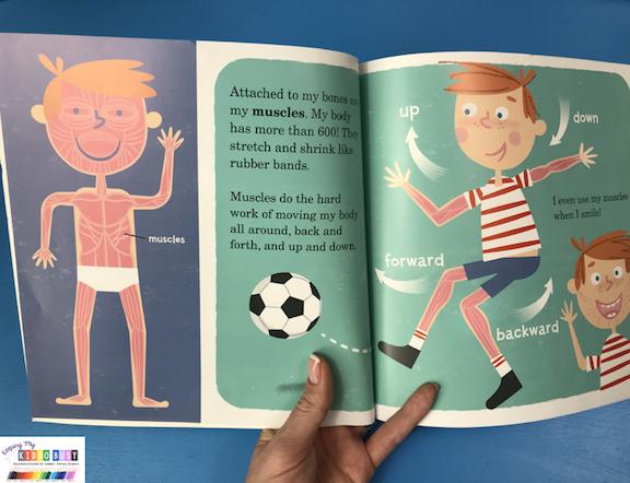 my amazing human body preschool book activities