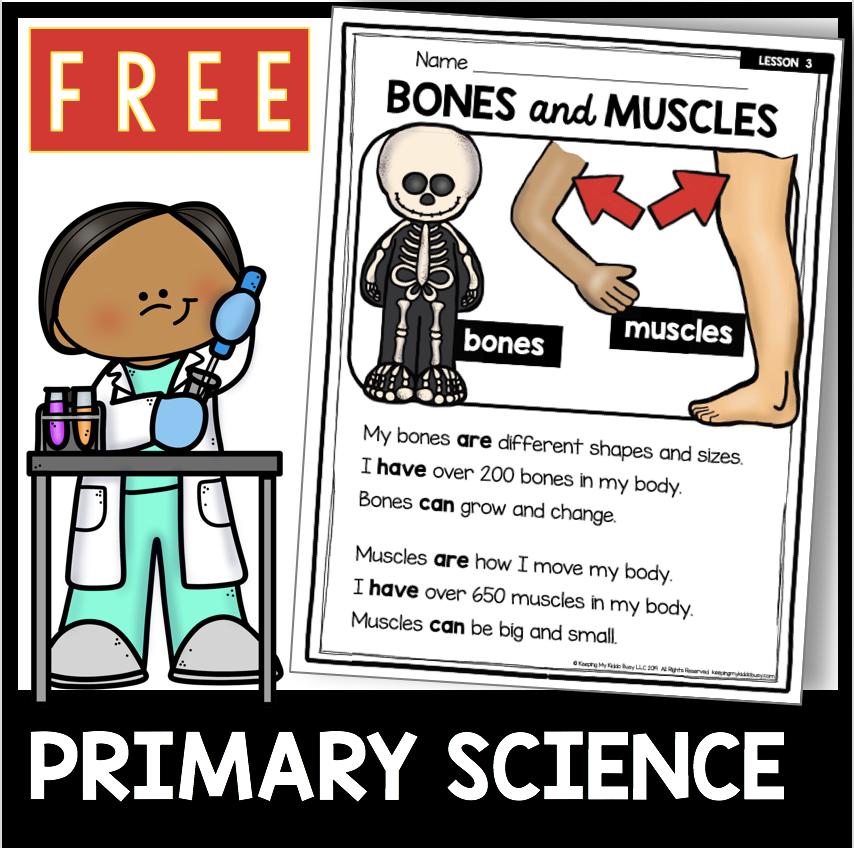 bones and muscles kindergarten science first grade