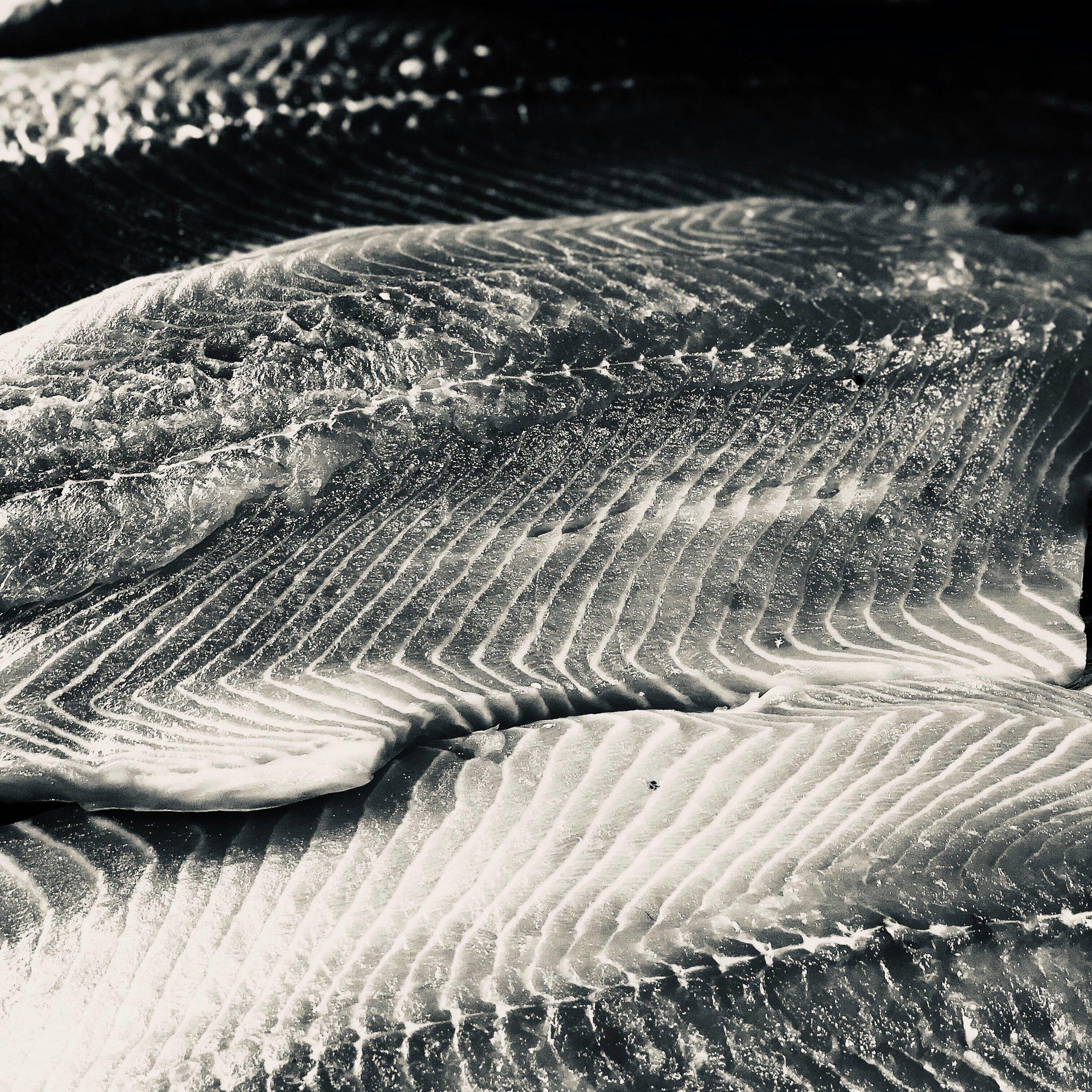 B&W salmon.jpg