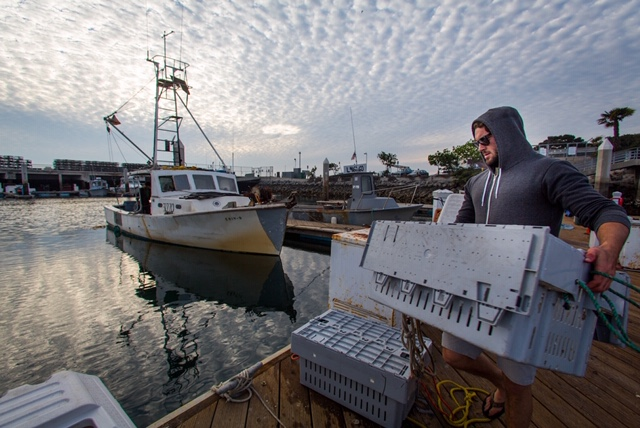Aragosta Mama - Luke Halmay - Peter Halmay's Son - Tuna Harbor Dockside Market