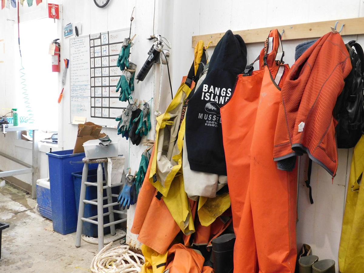 Aragosta Mama_Matt Moretti_Bangs Island Mussels_Maine