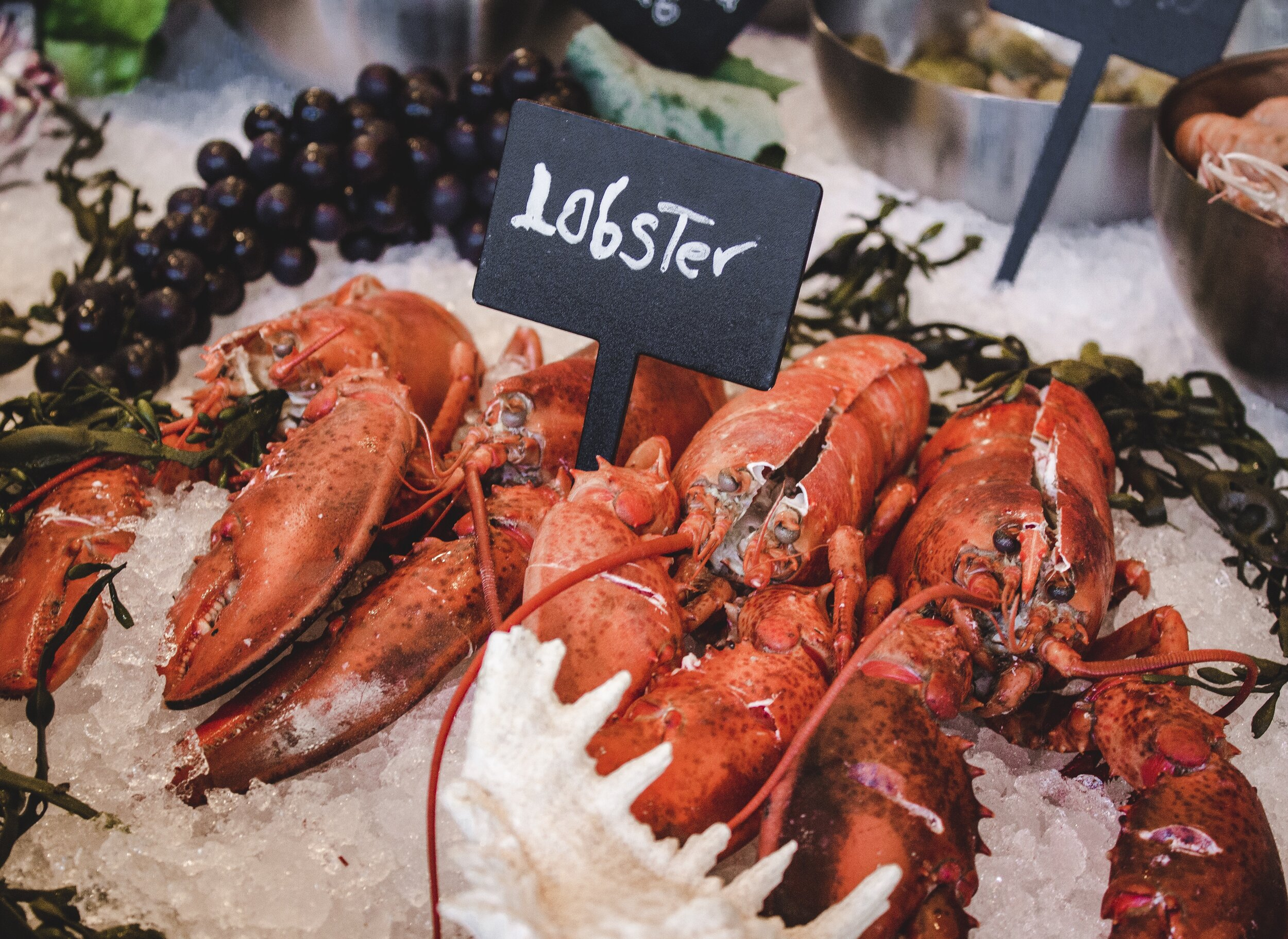 Do not store live lobsters on ice for a long period of time because the ice will melt and they will die.