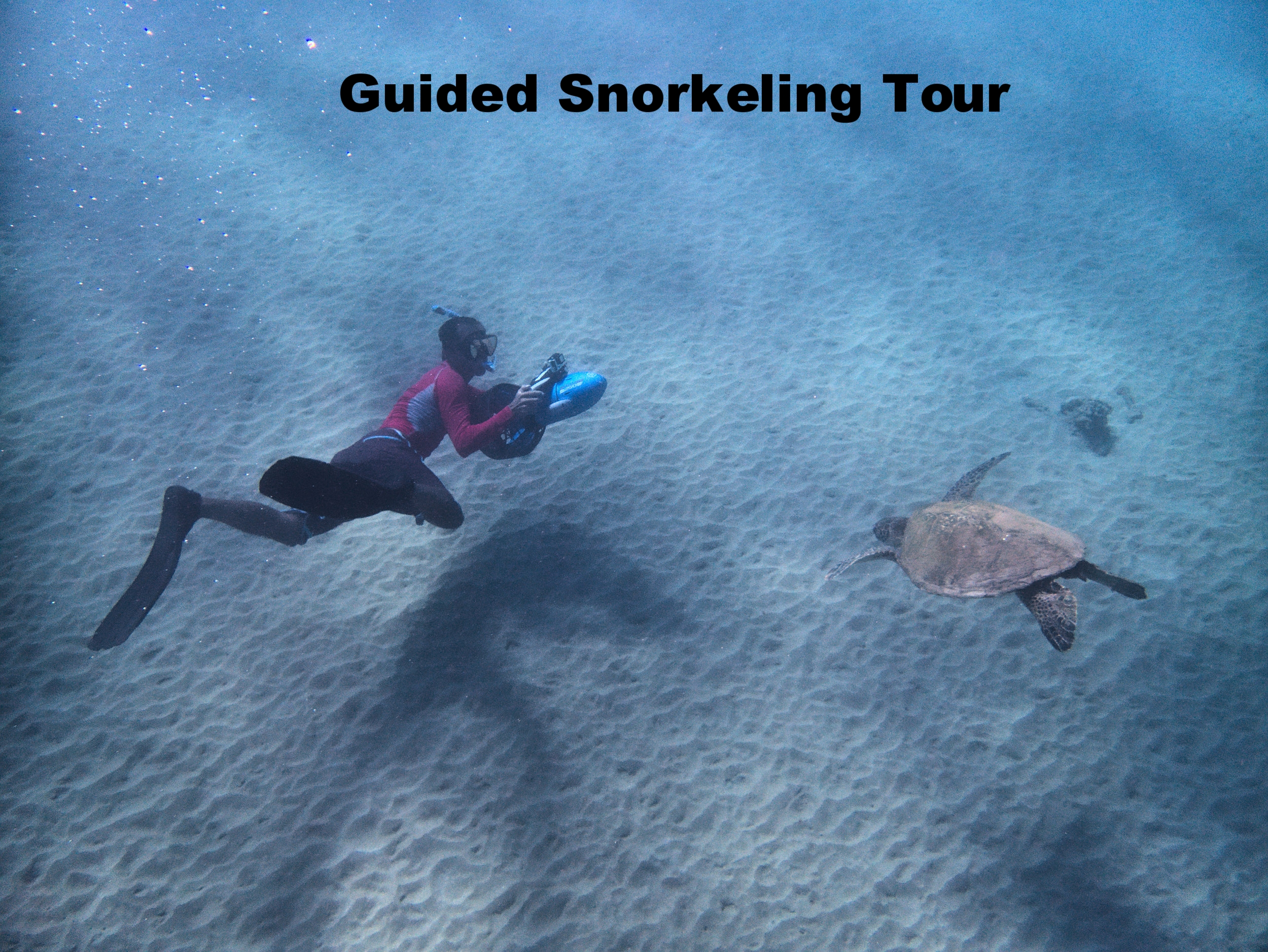 Copy of Guided Snorkeling Tour