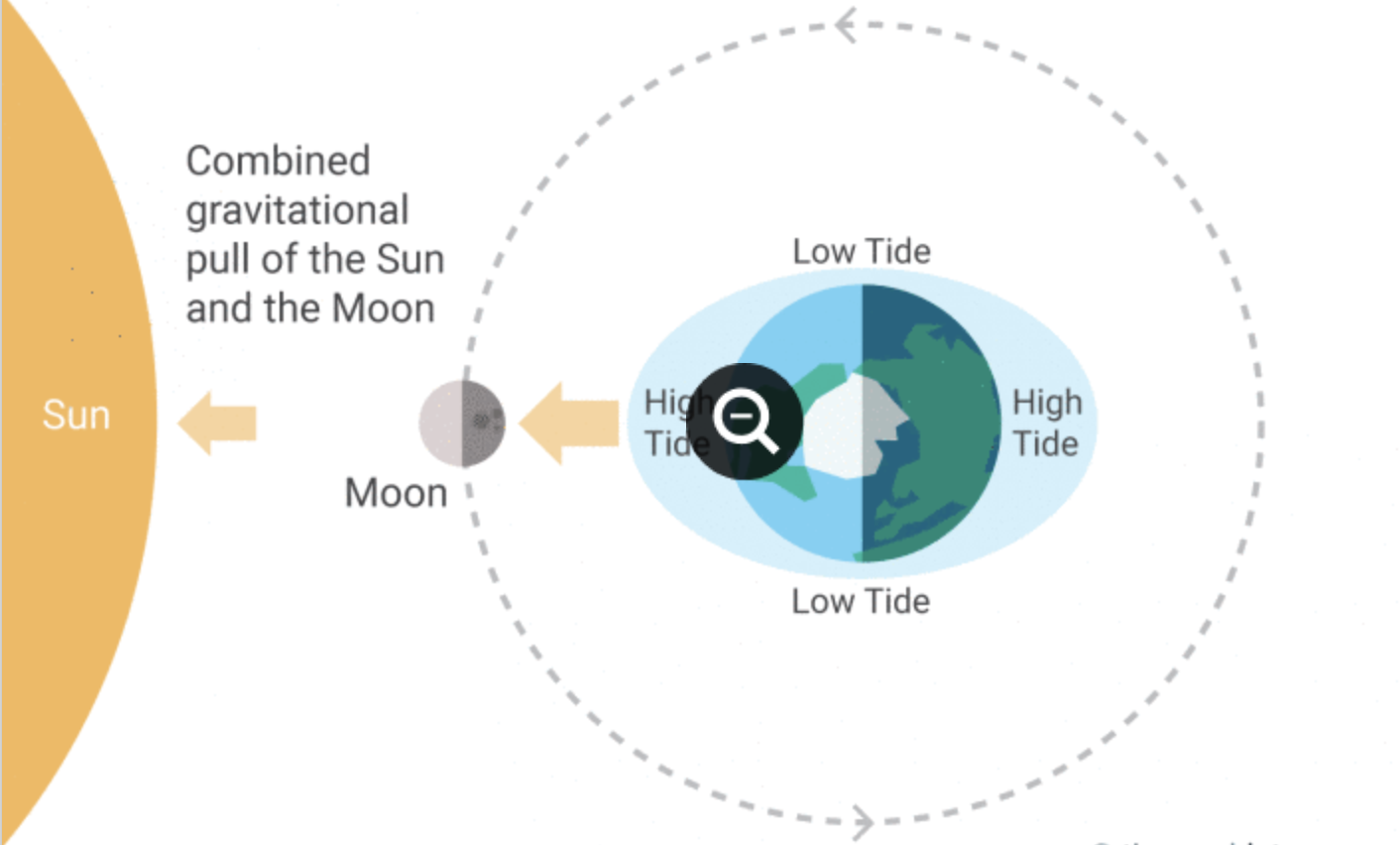 The tidal range, the difference between high and low tide, is greatest when moon and sun pull in the same or opposite direction, at new and full moons. The range is also highest in June and December when the earth's rotation brings Sausalito closest to the plane of the moons rotation. NOAA has a  comprehensive  tutorial   on tides. More idiosyncratic  essays  on topics specific to the Sausalito area can be  found on this author's website.
