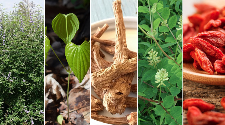 Left to right: Chaste Tree, Wild Yam, Dang Gui (source: louisvillecommunityacupuncture.com), Astralagus, Goji berries (source: overwade13.rssing.com).