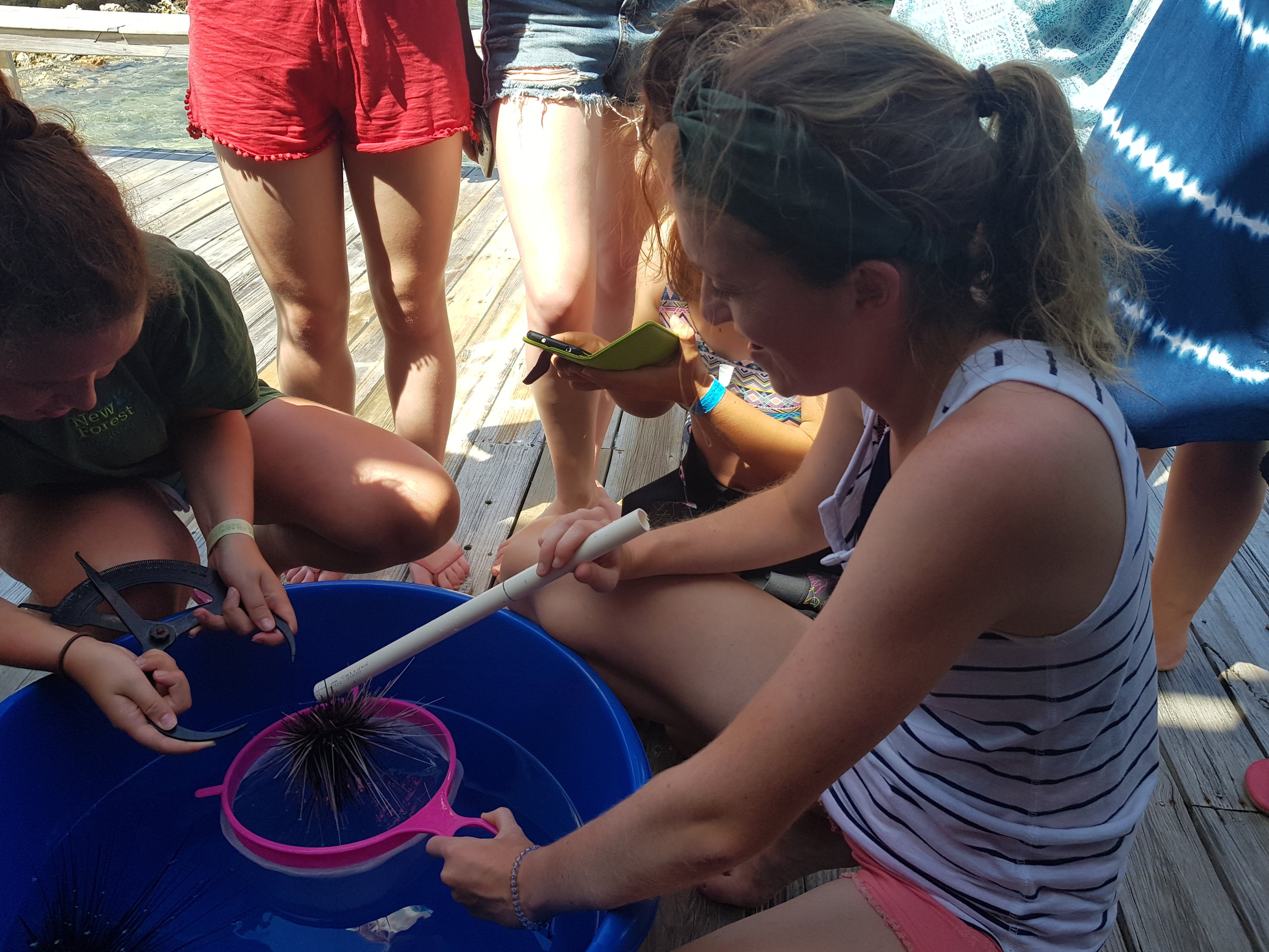 Some hands on experience for the 2018 Opwall volunteers, learning about the long spined sea urchin,  Diadema antillarum