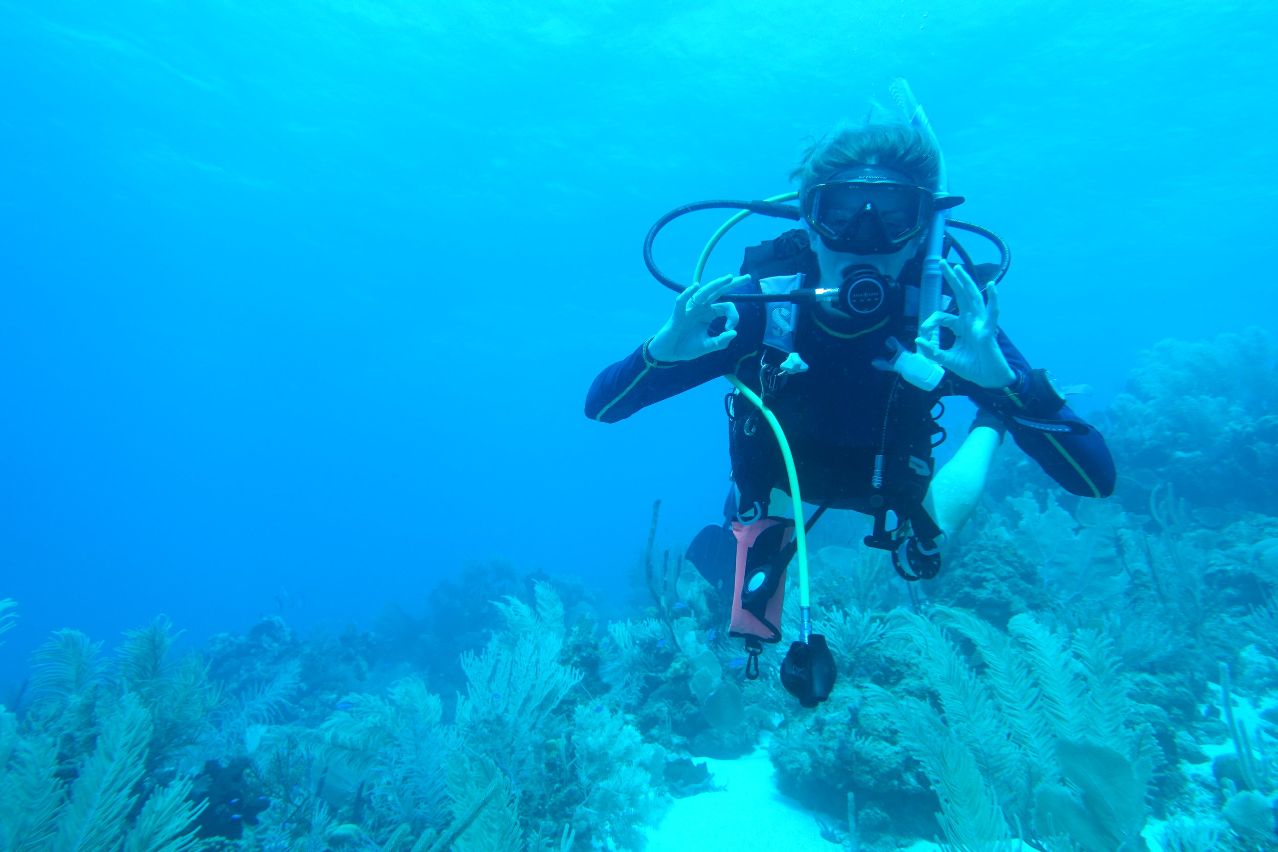 Keep up to date about the life of a marine biologist above and below the waves! -