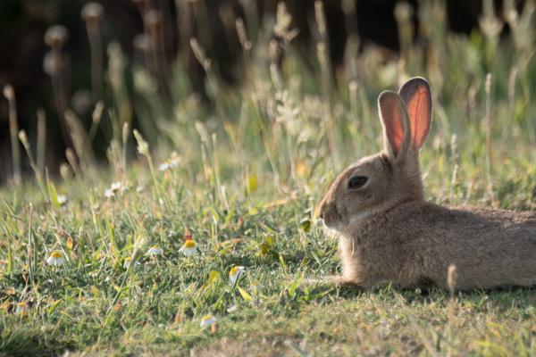 bunny relaxing in field resize.jpg